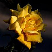 Душа цветка так нежна и прекрасна :: Валентина *
