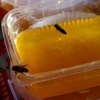 пчелы тоже любят мёд :: Юлия Мошкова