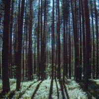 Карелия. Линейная графика леса. :: Александр Белоглазов
