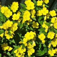 Желтый ковер :: Лидия (naum.lidiya)