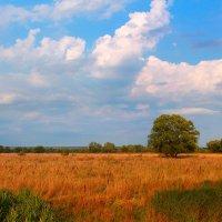 Ранняя осень :: Эркин Ташматов