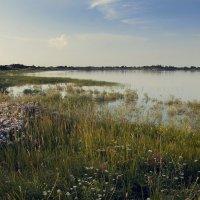 Краснодарское водохранилище :: Виктория Велес