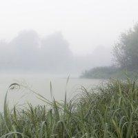 Осень, болото, утро... и тишина! :: Vladislav Gubskiy
