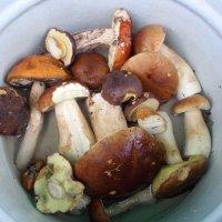 Лесные грибы :: BoxerMak Mak