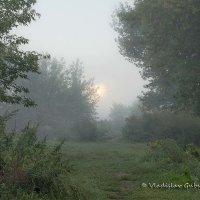 Утро, туман и восходящее солнце отражается от окон дома :: Vladislav Gubskiy