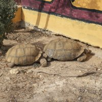 Черепахи :: Ирина Корнеева