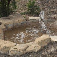 Белые тигры :: Ирина Корнеева