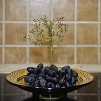 grape tree :: Petr Popov