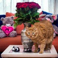 Кот и розы :: Александр Буслов