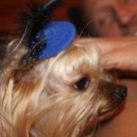 Моя собака :: Savayr