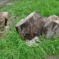 А когда-то были деревьями... :: Нина Корешкова