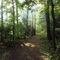 Дым в лесу IMG_8489 :: Андрей Лукьянов