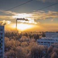 Морозное утро :: Ольга Бурда