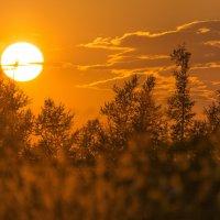 закат солнца :: Алексей -