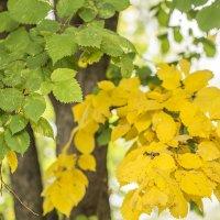лето и осень :: Лариса Батурова