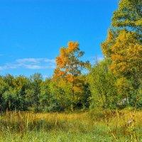 осень наступает :: Юрий Бичеров