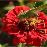 Прыг скок на красный цветок :: galina tihonova