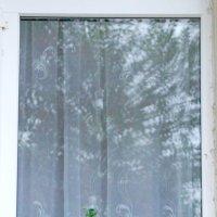 Цветок в окне :: Алексей Медведев