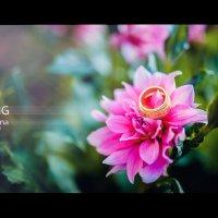 Свадебные цветы :: Сергей Пилтник
