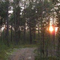 Закатное солнце за лесом. :: Галина Полина