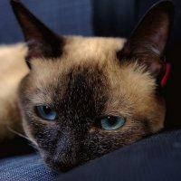 Задумчивый кот... :: марк