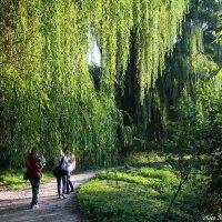 Зеленый сентябрь :: Виктор Марченко