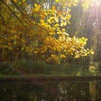 Осенний свет.... :: анна нестерова