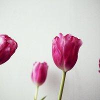 flowers :: Екатерина Захарова