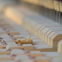 Осенний лист на потрохах раздолбанного пианино, стоящего во дворе детского сада. :: Иван Губин
