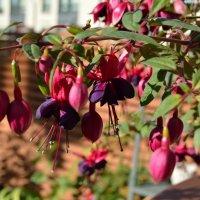 Цветы лета :: Inna Kort