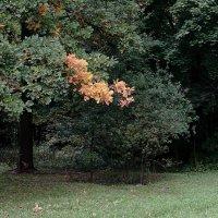 Жёлтая ветвь. :: Яков Реймер
