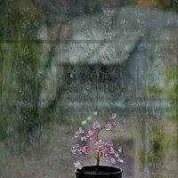 Хрустальный цветок :: Aioneza (Алена) Московская