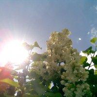 сирень на небе :: Ольга