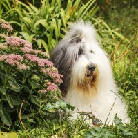 Мышка в цветочках :: Лариса Батурова