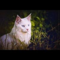 Casper :: Maria Alieva