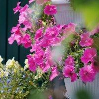 Цветы :: Eugene A. Chigrinski