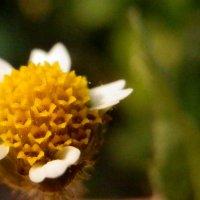 Миниатюрный цветок :: Стас Мельник