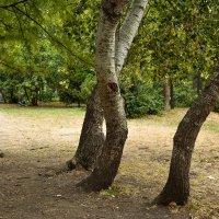 Шагающее деревянное чудище :: Николай Глазьев