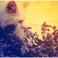 как пахнут цветочки :: Viktoriya Bilan
