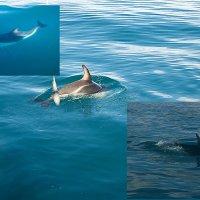 дельфины :: Petr Popov