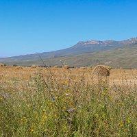 На полях Карачаево-Черкессии :: Vladimir 070549
