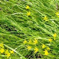 Весенняя лужайка :: Лидия (naum.lidiya)