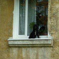 ну и что, что я собака?) :: Oxi --