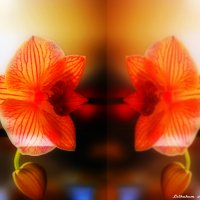 Галерея цветов(5) :: Александр Лейкум