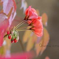 В красках бабьего лета... :: Bosanat
