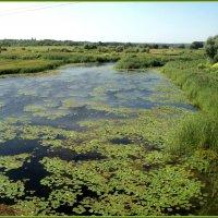 Река Битюг в селе Шестаково Воронежской области :: Ольга Кривых