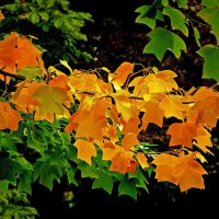 Осенняя прядь :: Alexander Andronik