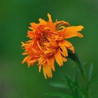 Оранжевая фантастика :: Natali-C C
