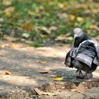bird :: Дмитрий Финансов