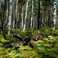В лесу. :: Rafael